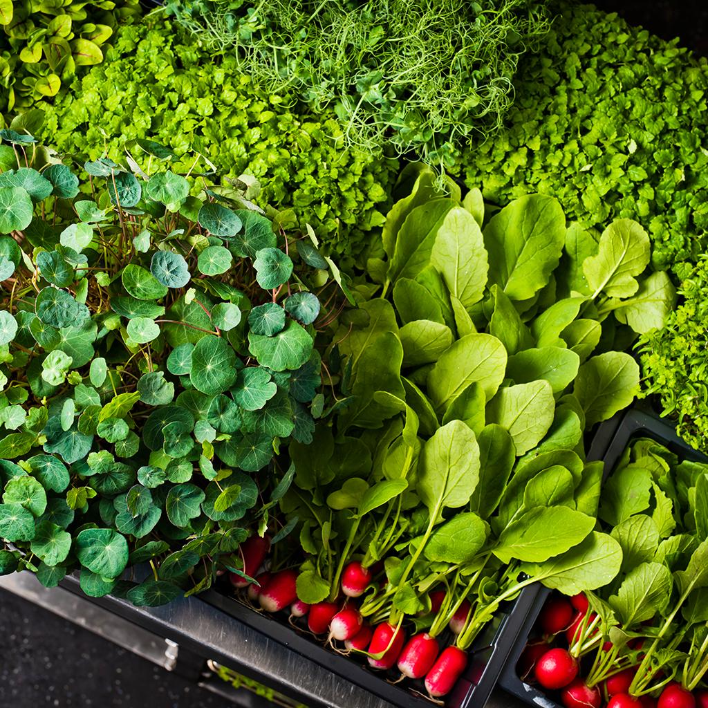 Fresh produce Radish herbs The Art School
